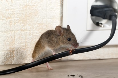 Pest Control in Hayes, Harlington, UB3, UB4. Call Now! 020 8166 9746